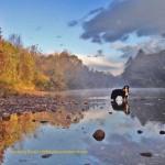 Dog in the Saco River